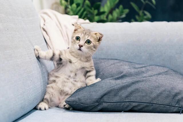 بلیوں کے بارے میں دلچسپ حقائق
