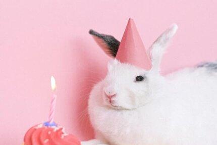 خرگوش کی سالگرہ