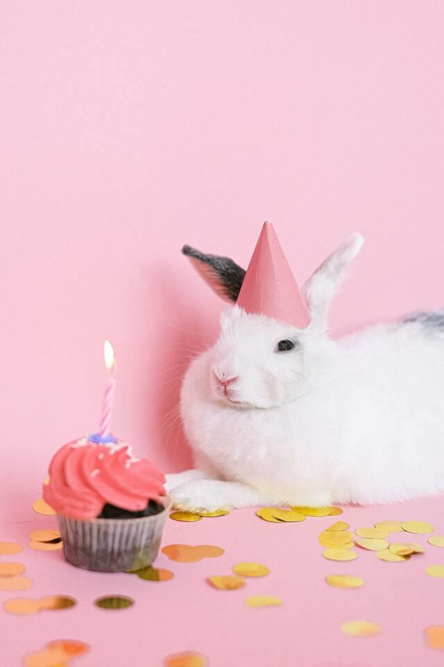 خرگوش کی سالگرہ نظم بچوں کے لئے سالگرہ کے دن سالگرہ کی تقریب کے لئے